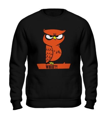 Свитшот What owl?