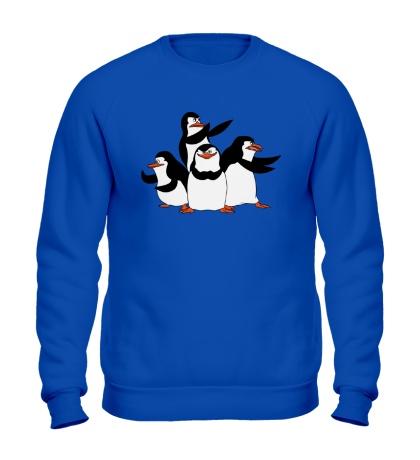 Свитшот Пингвины из Мадагаскара