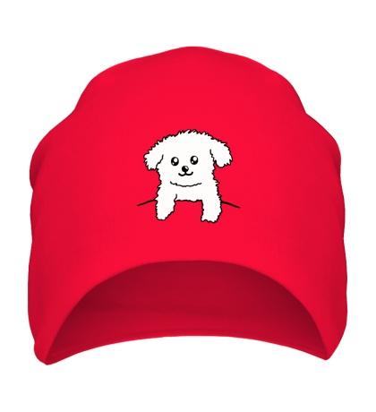 Шапка Карманный пёс