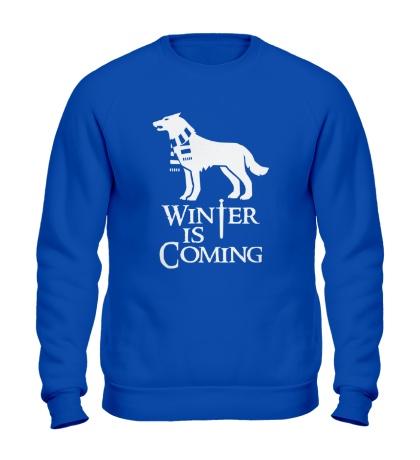 Свитшот Winter is Coming: Dog
