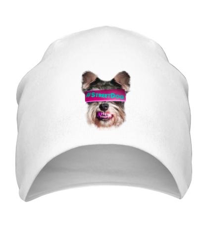 Шапка Street Dog
