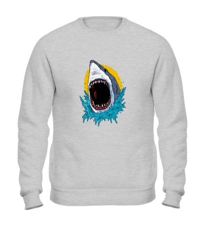 Свитшот Дикая акула