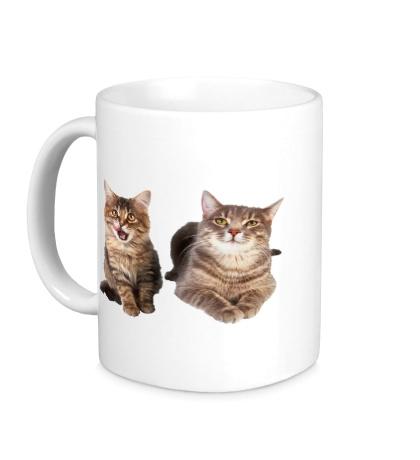 Керамическая кружка Кошка и котёнок