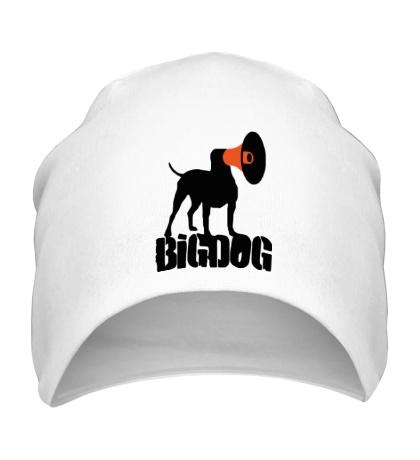 Шапка Bigdog